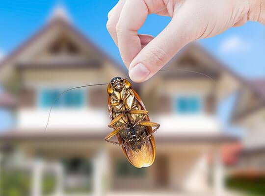 La mano de una mujer sostiene una cucaracha afuera, con una casa de fondo.
