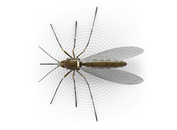 Ilustración superior de un mosquito.