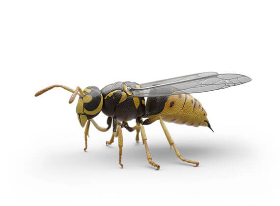 Ilustración lateral de una avispa amarilla.