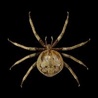 Ilustración de una araña